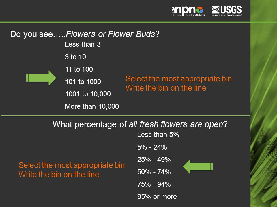 Do you see…..Flowers or Flower Buds.