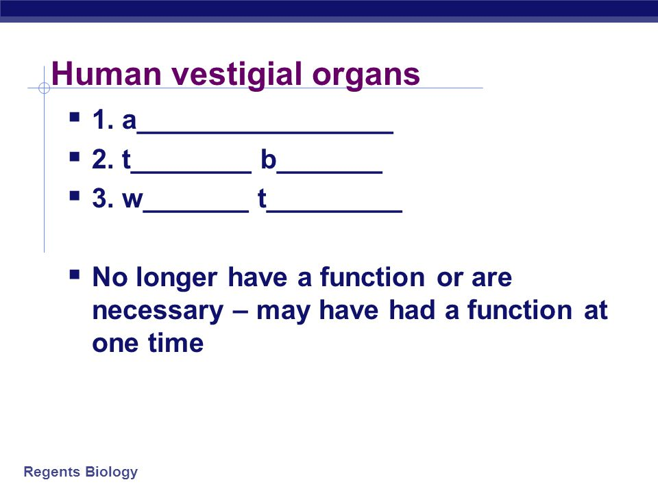 Regents Biology Vestigial organs  Structures on modern animals that have no function  remains of structures that were functional in ancestors  evid