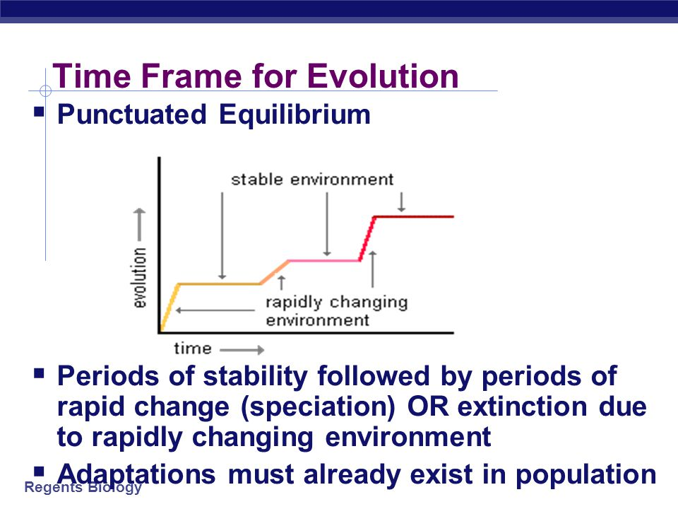 Regents Biology REVIEW - Evidence of Evolution  1. Fossils  2. Comparative Anatomy  h______________ structures  v____________  e________________