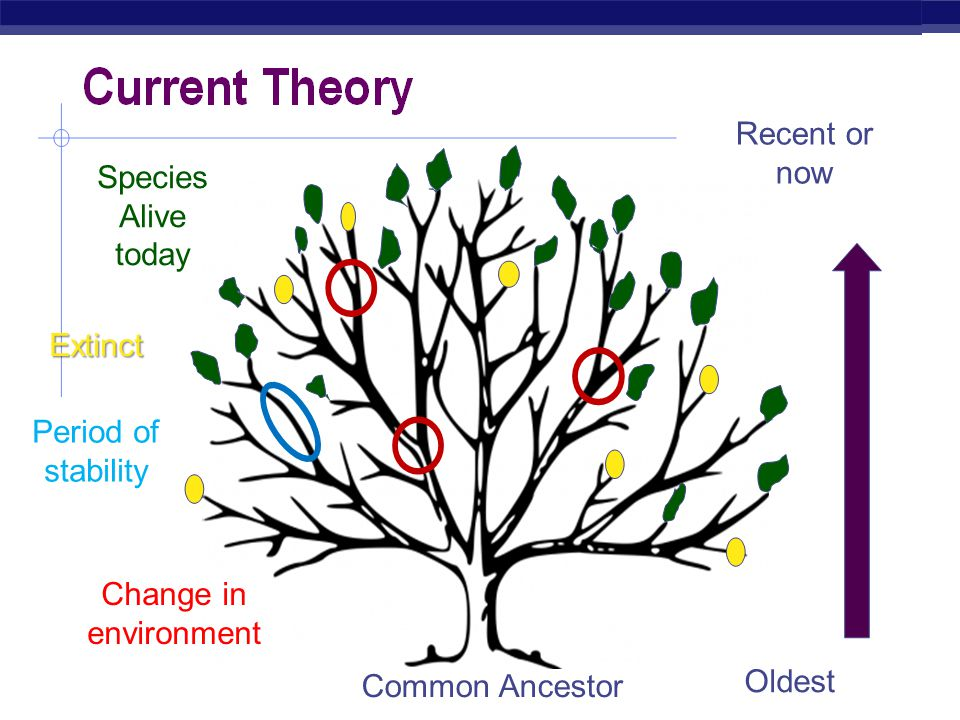 Regents Biology Time Frame for Evolution  Gradualism  Slow, continual change due to a more stable environment