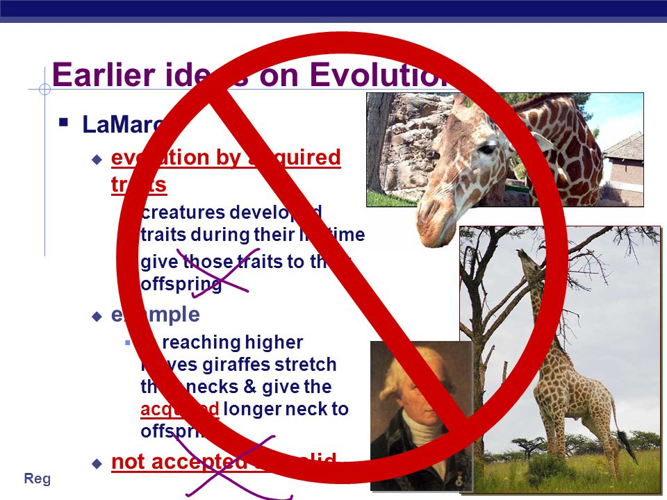 Regents Biology  LaMarck  evolution by acquired traits  creatures developed traits during their lifetime  give those traits to their offspring  example  in reaching higher leaves giraffes stretch their necks & give the acquired longer neck to offspring  not accepted as valid Earlier ideas on Evolution