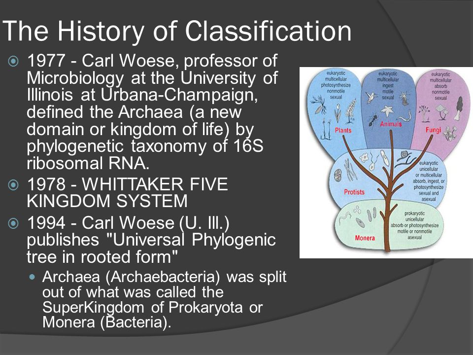  1977 - Carl Woese, professor of Microbiology at the University of Illinois at Urbana-Champaign, defined the Archaea (a new domain or kingdom of life) by phylogenetic taxonomy of 16S ribosomal RNA.