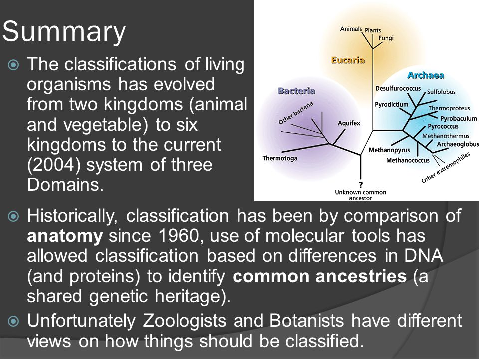 Summary  The classifications of living organisms has evolved from two kingdoms (animal and vegetable) to six kingdoms to the current (2004) system of three Domains.