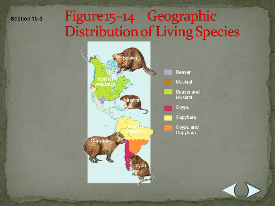 Homologous Body Structures - structures which have different mature forms but develop from the same embryonic tissues - living organisms have many anatomical similarities that have been adapted to different forms and functions - limbs of all vertebrates have similar bones which develop from the same embryonic clusters of cells - close examination shows that similarities are greatest among most closely related species and allow biologists to judge how closely related organisms are.