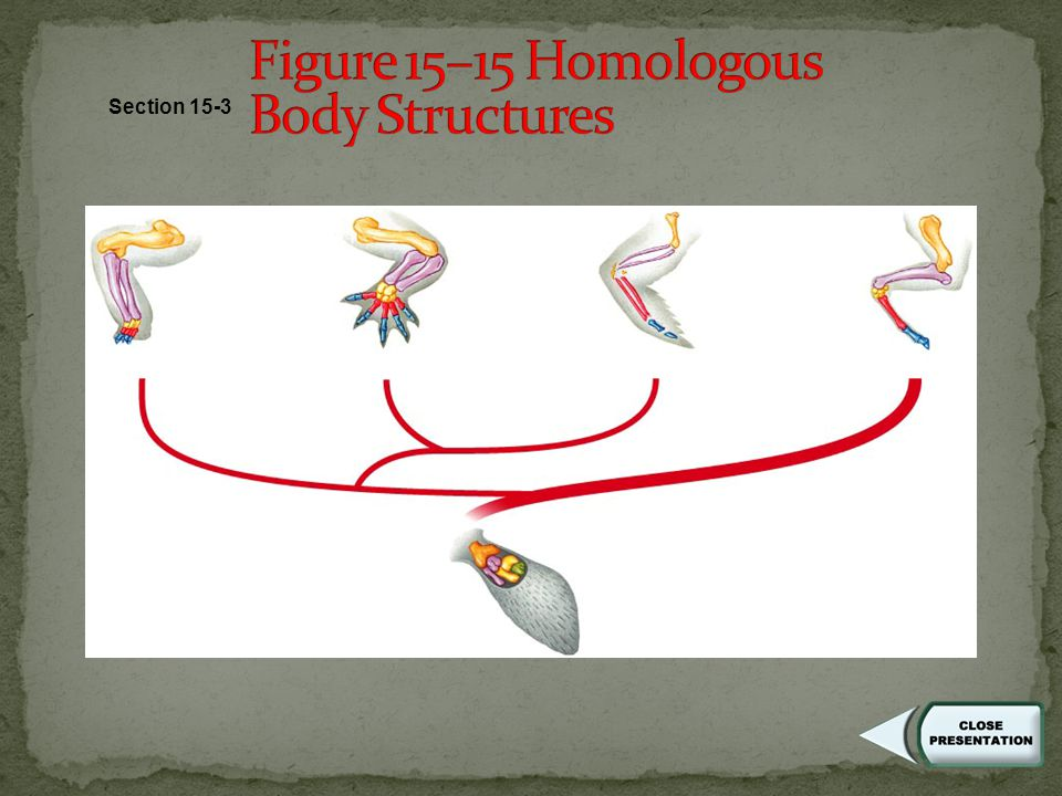 Similarities in Embryology - early stages (embryos) of many vertebrates are very similar - the same groups of embryonic cells become the same adult structures in most vertebrates - control of development is by the same genes in each group, not only in vertebrates, but also across other phyla