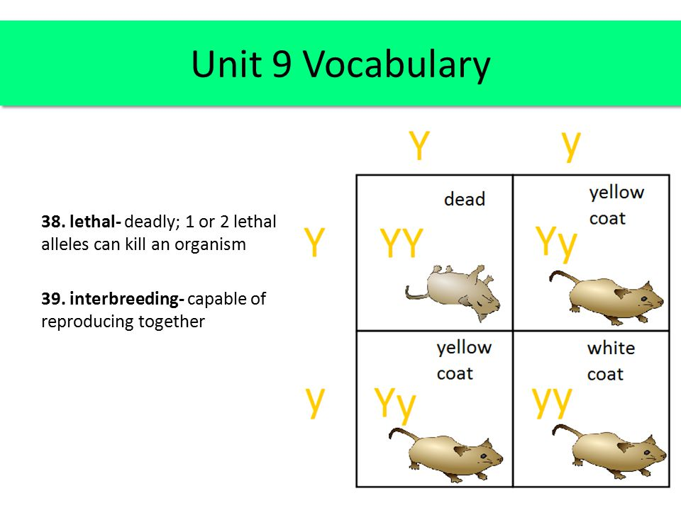 38. lethal- deadly; 1 or 2 lethal alleles can kill an organism 39. interbreeding- capable of reproducing together Unit 9 Vocabulary