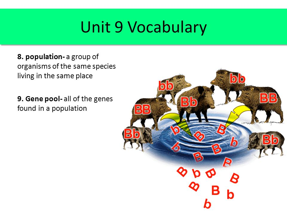 Unit 9 Vocabulary 8. population- a group of organisms of the same species living in the same place 9. Gene pool- all of the genes found in a populatio