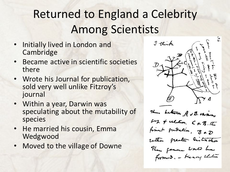 Returned to England a Celebrity Among Scientists Initially lived in London and Cambridge Became active in scientific societies there Wrote his Journal for publication, sold very well unlike Fitzroy's journal Within a year, Darwin was speculating about the mutability of species He married his cousin, Emma Wedgwood Moved to the village of Downe