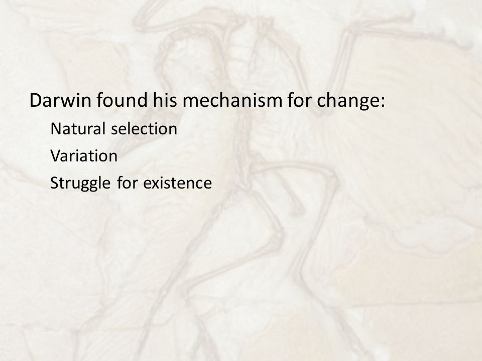Darwin found his mechanism for change: Natural selection Variation Struggle for existence