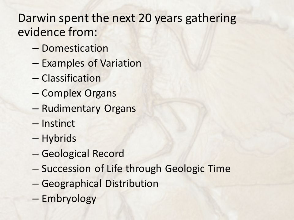 Darwin spent the next 20 years gathering evidence from: – Domestication – Examples of Variation – Classification – Complex Organs – Rudimentary Organs – Instinct – Hybrids – Geological Record – Succession of Life through Geologic Time – Geographical Distribution – Embryology