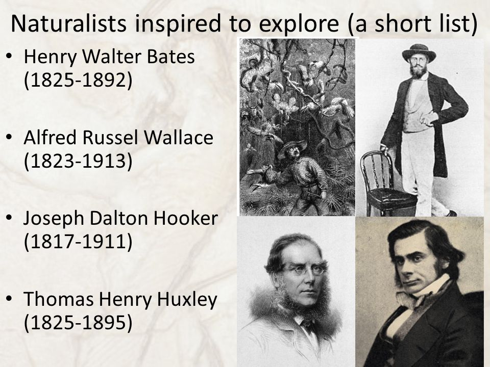 Naturalists inspired to explore (a short list) Henry Walter Bates (1825-1892) Alfred Russel Wallace (1823-1913) Joseph Dalton Hooker (1817-1911) Thoma