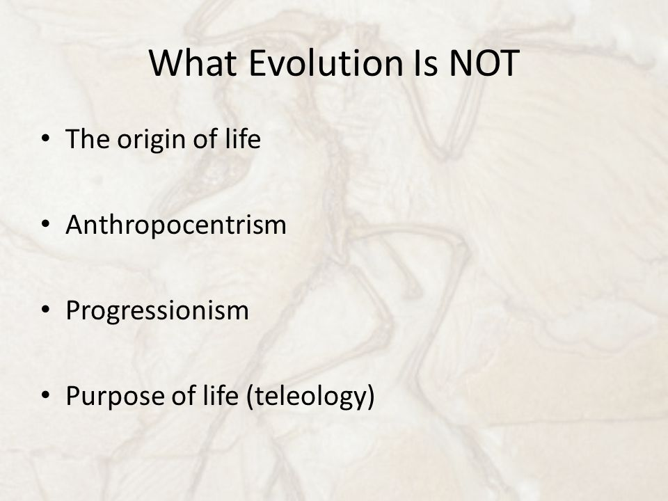 What Evolution Is NOT The origin of life Anthropocentrism Progressionism Purpose of life (teleology)