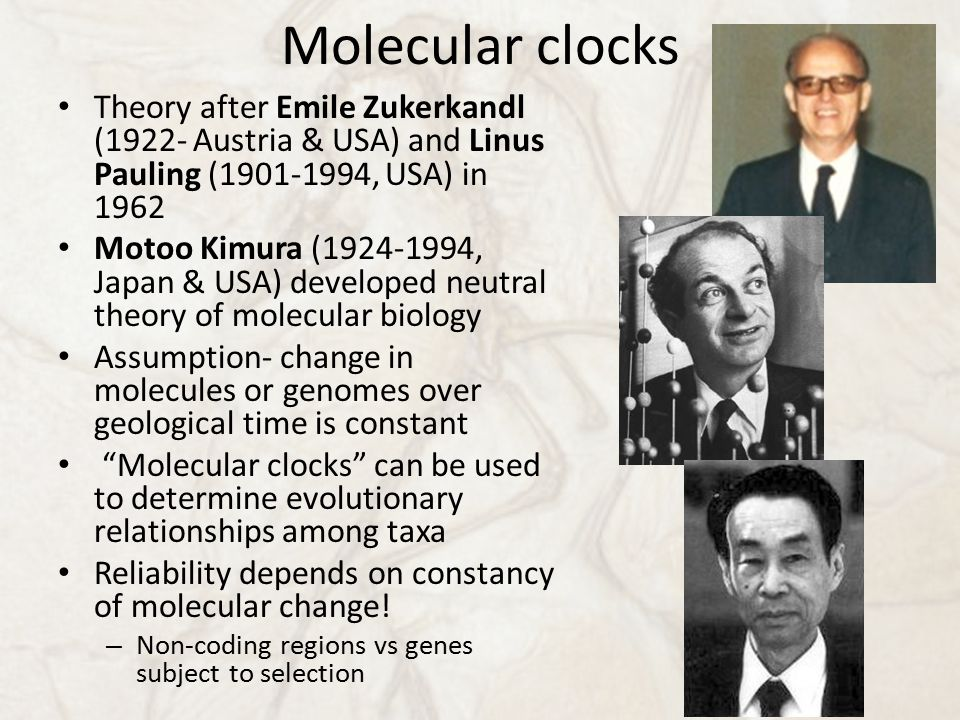 Molecular clocks Theory after Emile Zukerkandl (1922- Austria & USA) and Linus Pauling (1901-1994, USA) in 1962 Motoo Kimura (1924-1994, Japan & USA) developed neutral theory of molecular biology Assumption- change in molecules or genomes over geological time is constant Molecular clocks can be used to determine evolutionary relationships among taxa Reliability depends on constancy of molecular change.
