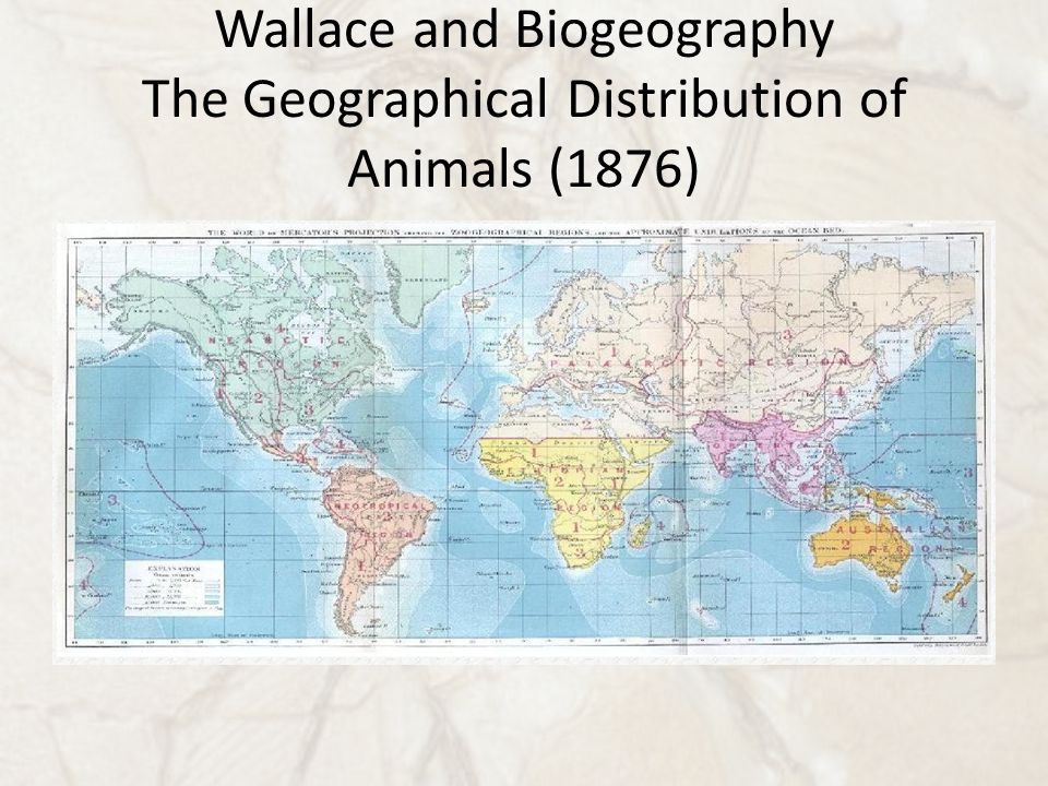 Wallace and Biogeography The Geographical Distribution of Animals (1876)
