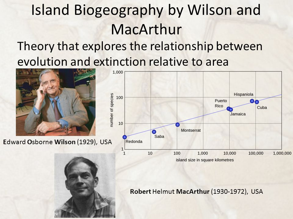 Island Biogeography by Wilson and MacArthur Theory that explores the relationship between evolution and extinction relative to area Robert Helmut MacArthur (1930-1972), USA Edward Osborne Wilson (1929), USA