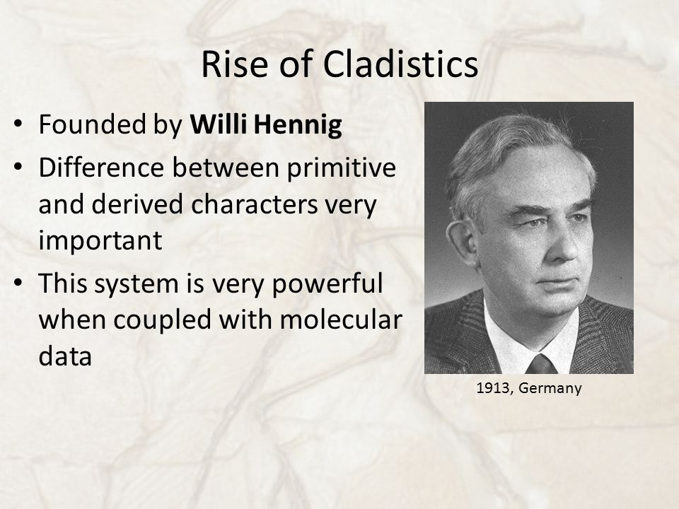 Rise of Cladistics Founded by Willi Hennig Difference between primitive and derived characters very important This system is very powerful when couple