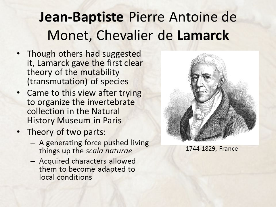 Jean-Baptiste Pierre Antoine de Monet, Chevalier de Lamarck Though others had suggested it, Lamarck gave the first clear theory of the mutability (transmutation) of species Came to this view after trying to organize the invertebrate collection in the Natural History Museum in Paris Theory of two parts: – A generating force pushed living things up the scala naturae – Acquired characters allowed them to become adapted to local conditions 1744-1829, France