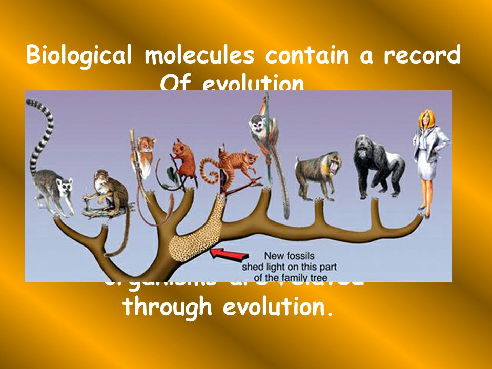 A common ancestor is a species From which 2 or more species Have diverged.