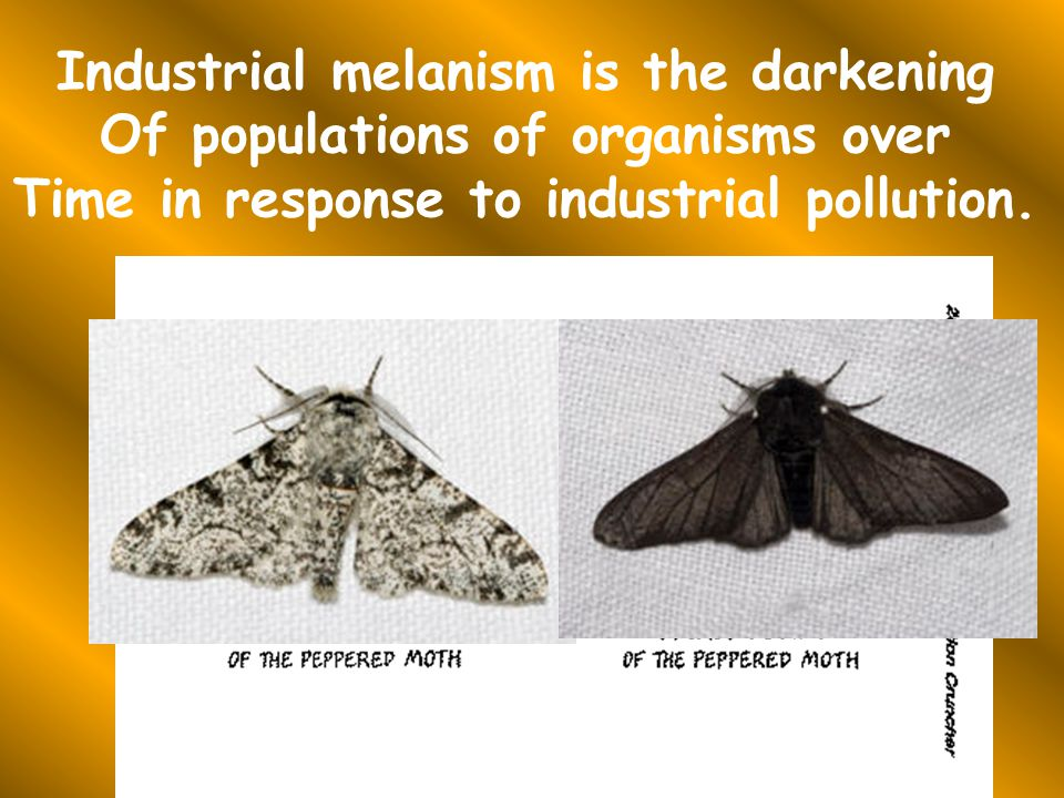 Industrial melanism is the darkening Of populations of organisms over Time in response to industrial pollution.