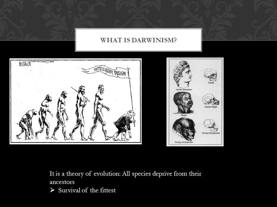 WHAT IS DARWINISM.