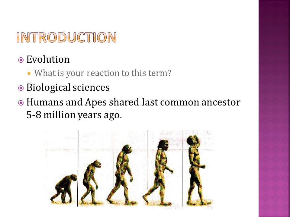  Evolution  What is your reaction to this term?  Biological sciences  Humans and Apes shared last common ancestor 5-8 million years ago.