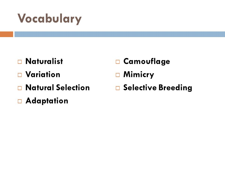 Vocabulary  Naturalist  Variation  Natural Selection  Adaptation  Camouflage  Mimicry  Selective Breeding