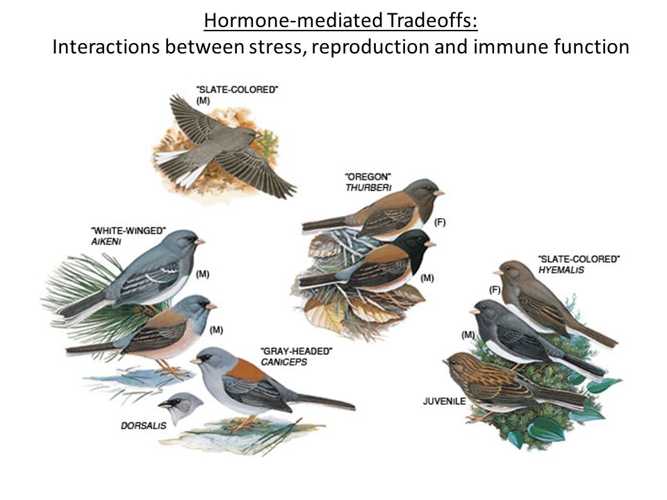 Hormone-mediated Tradeoffs: Interactions between stress, reproduction and immune function
