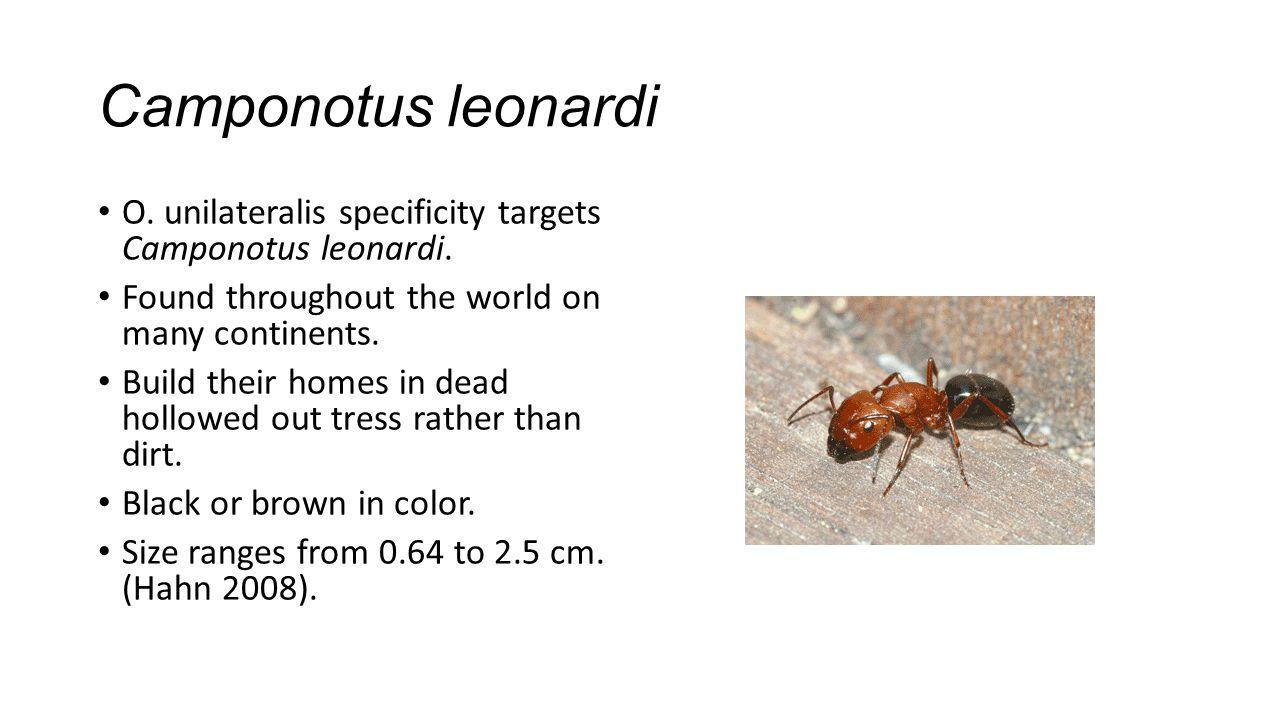 Camponotus leonardi O. unilateralis specificity targets Camponotus leonardi.