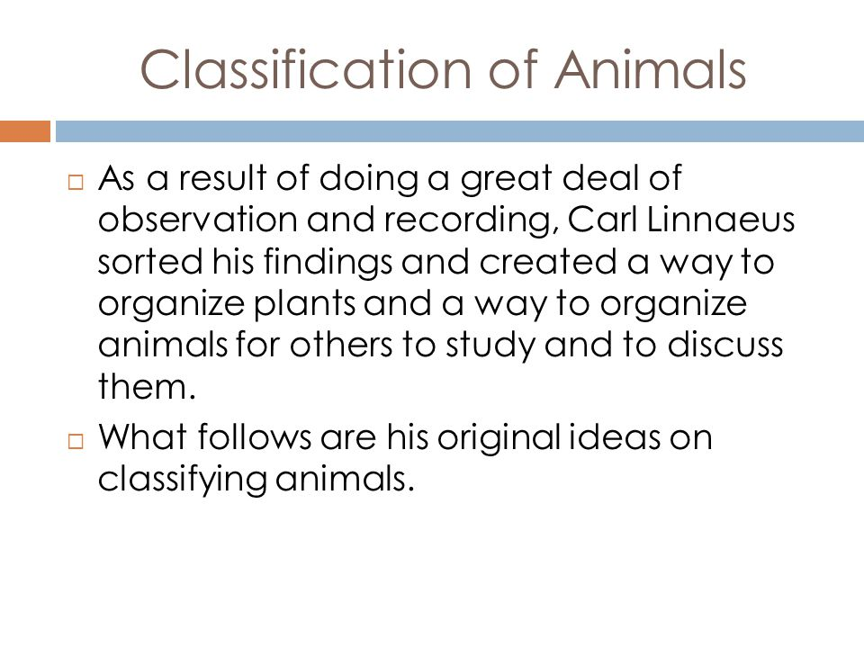Original Taxonomy of Animals  Linnaeus created 6 Categories:  Classis 1.