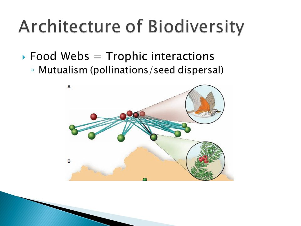  Food Webs = Trophic interactions ◦ Mutualism (pollinations/seed dispersal)