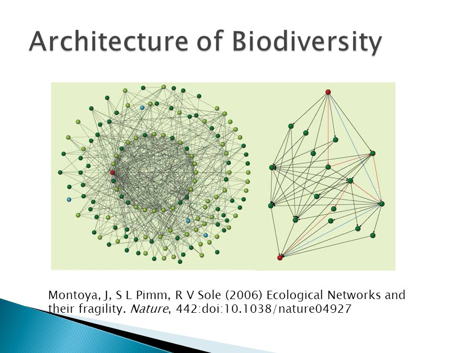 Montoya, J, S L Pimm, R V Sole (2006) Ecological Networks and their fragility. Nature, 442:doi:10.1038/nature04927