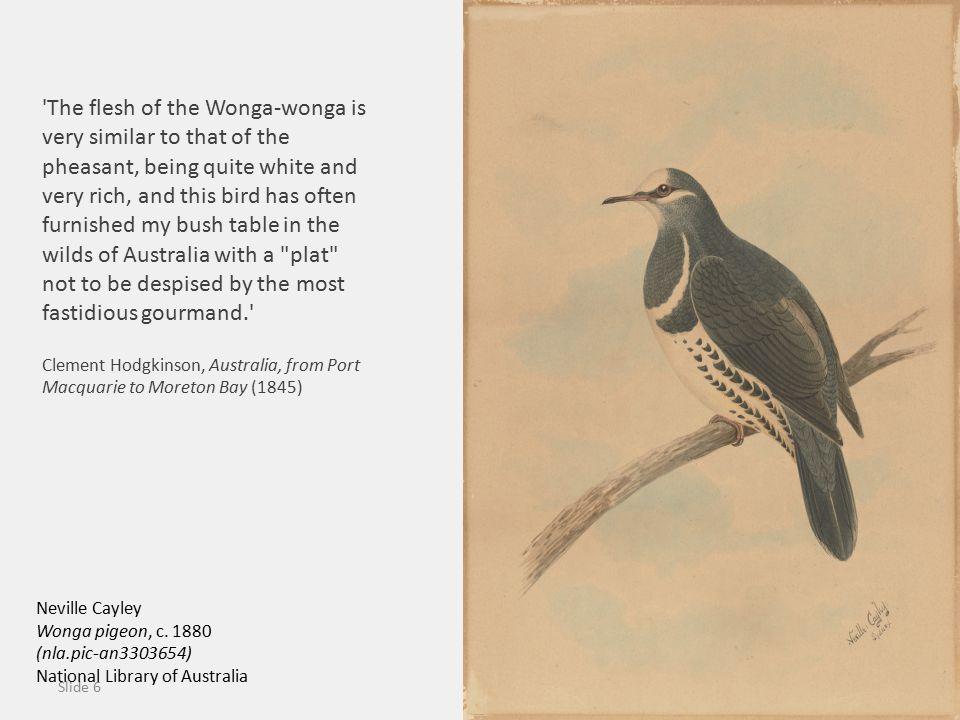 Slide 6 Neville Cayley Wonga pigeon, c.