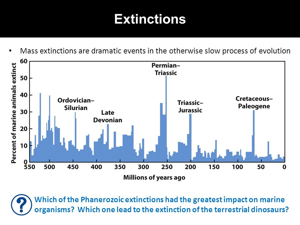 Extinctions Mass extinctions are dramatic events in the otherwise slow process of evolution Which of the Phanerozoic extinctions had the greatest impa