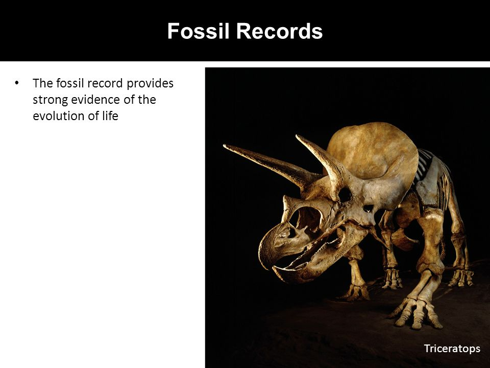 Fossil Records The fossil record provides strong evidence of the evolution of life Triceratops