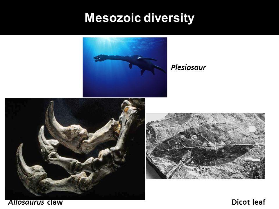 Mesozoic diversity Allosaurus claw Plesiosaur Dicot leaf Steven Earle