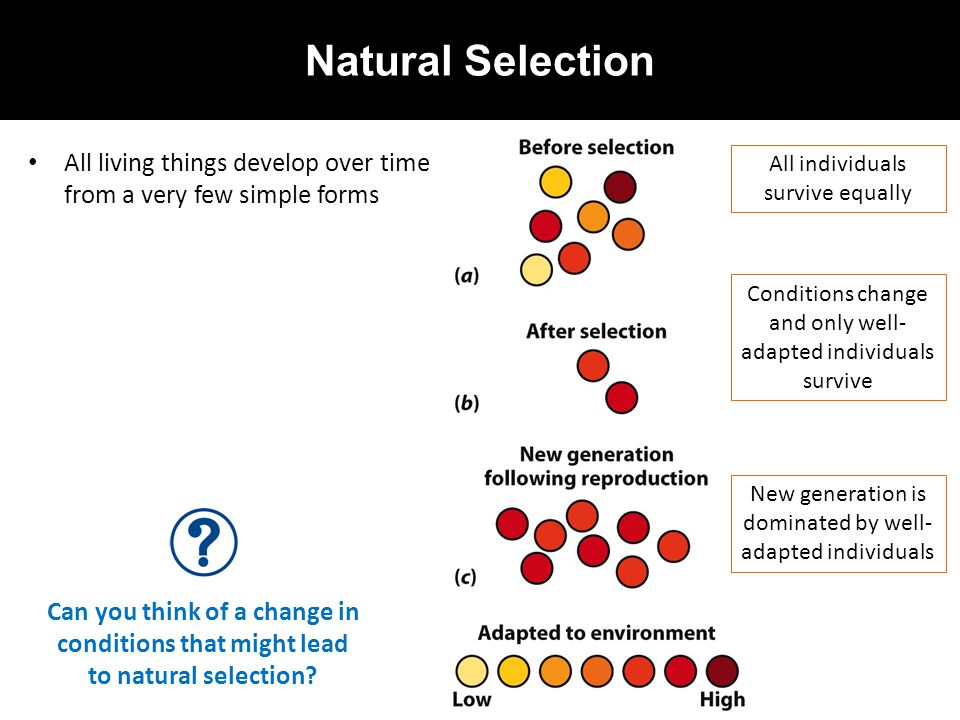 Natural Selection All living things develop over time from a very few simple forms All individuals survive equally Conditions change and only well- ad