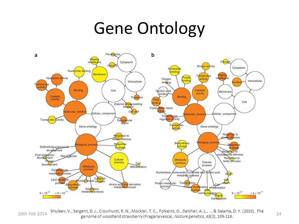 Gene Ontology 26th Feb 201424 Shulaev, V., Sargent, D.
