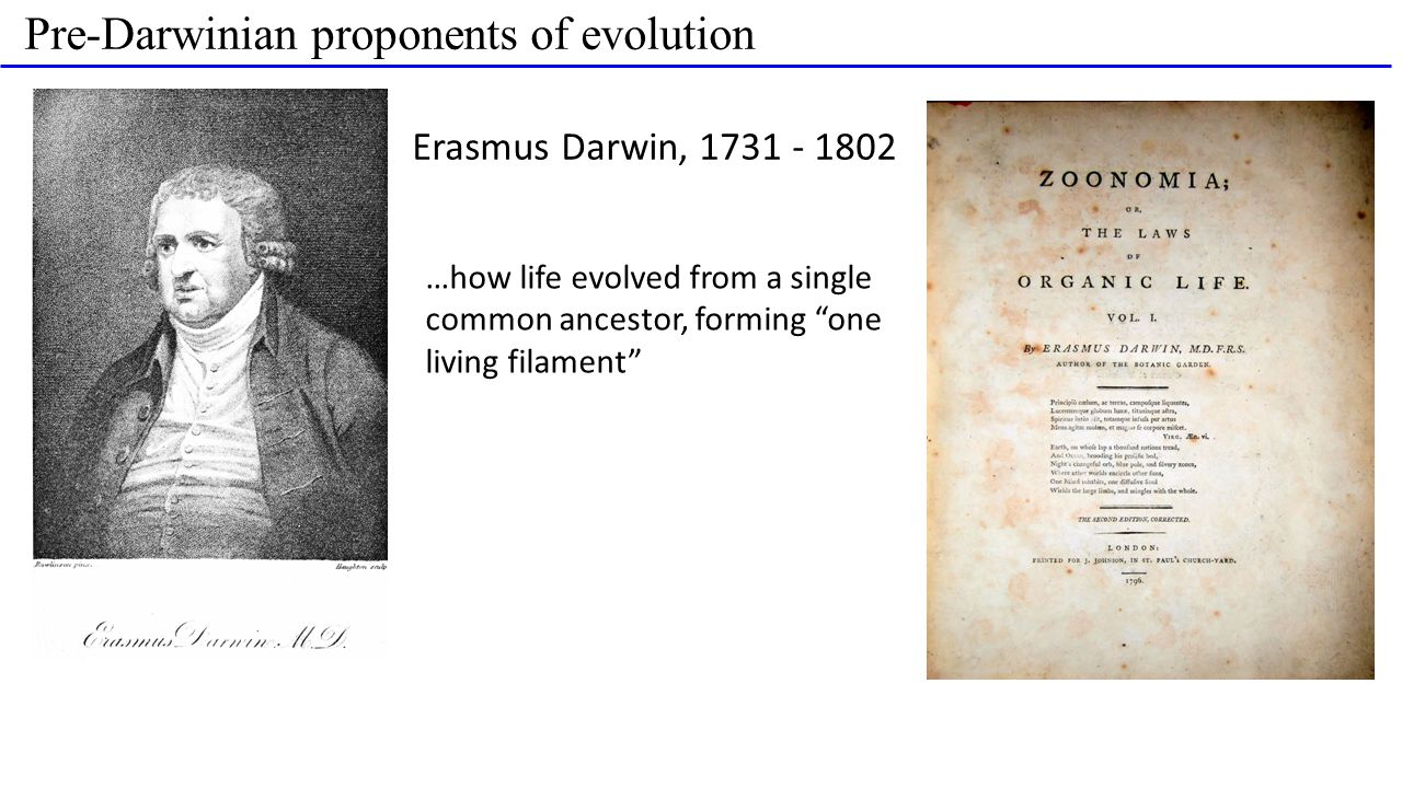 Pre-Darwinian proponents of evolution Erasmus Darwin, 1731 - 1802 …how life evolved from a single common ancestor, forming one living filament