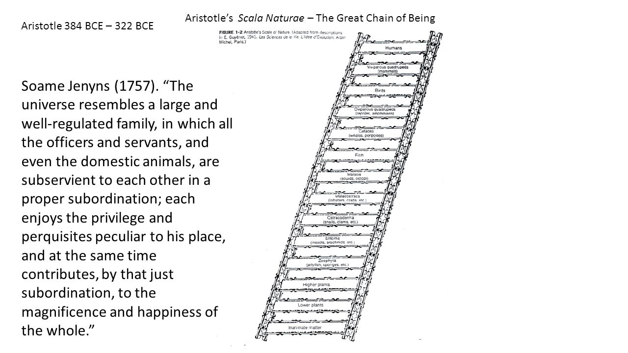 Aristotle's Scala Naturae – The Great Chain of Being Soame Jenyns (1757).