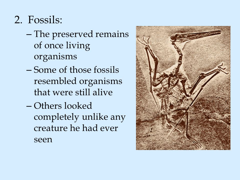 2.Fossils: – The preserved remains of once living organisms – Some of those fossils resembled organisms that were still alive – Others looked complete
