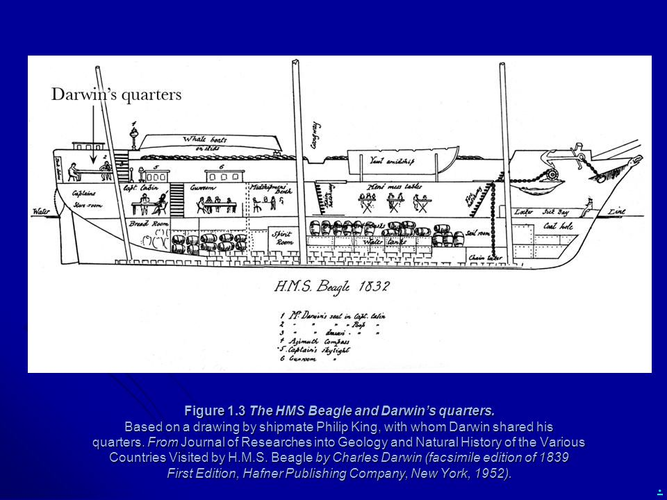 . Figure 1.3 The HMS Beagle and Darwin's quarters. Based on a drawing by shipmate Philip King, with whom Darwin shared his quarters. From Journal of R