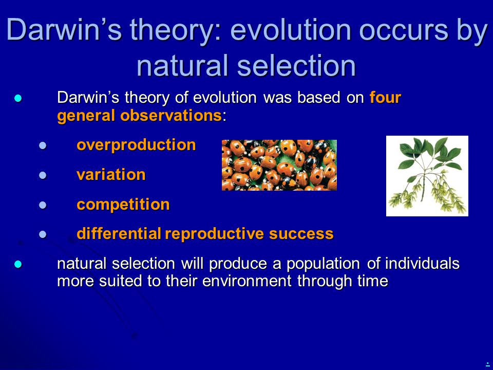 . Darwin's theory: evolution occurs by natural selection Darwin's theory of evolution was based on four general observations: Darwin's theory of evolu