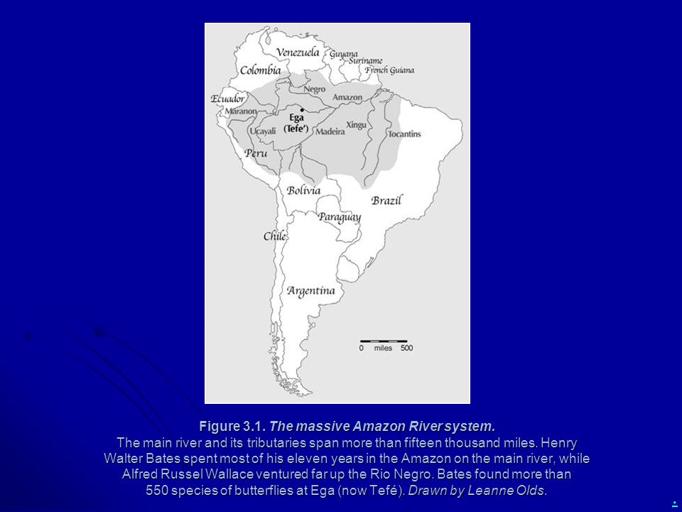 . Figure 3.1. The massive Amazon River system. The main river and its tributaries span more than fifteen thousand miles. Henry Walter Bates spent most