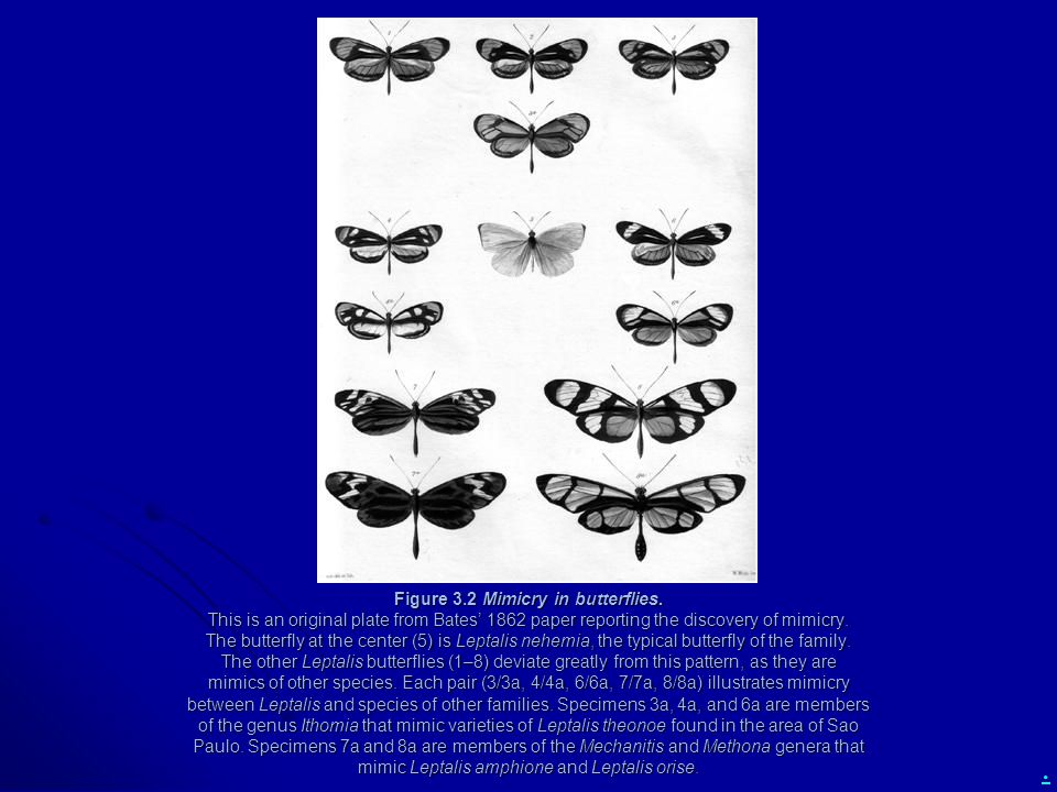 . Figure 3.2 Mimicry in butterflies. This is an original plate from Bates' 1862 paper reporting the discovery of mimicry. The butterfly at the center