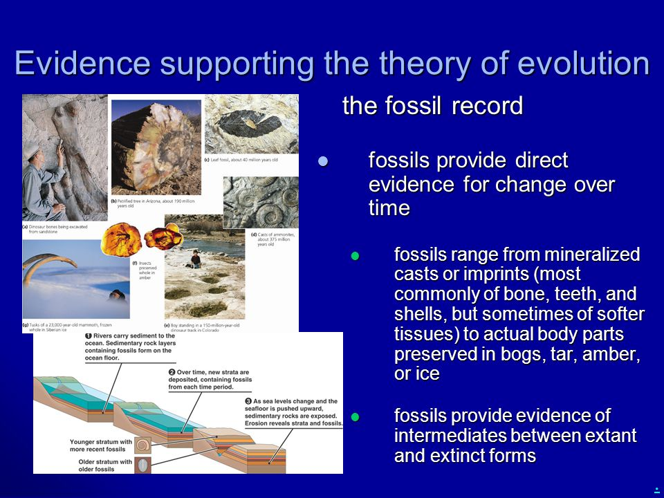 . Evidence supporting the theory of evolution the fossil record the fossil record fossils provide direct evidence for change over time fossils provide