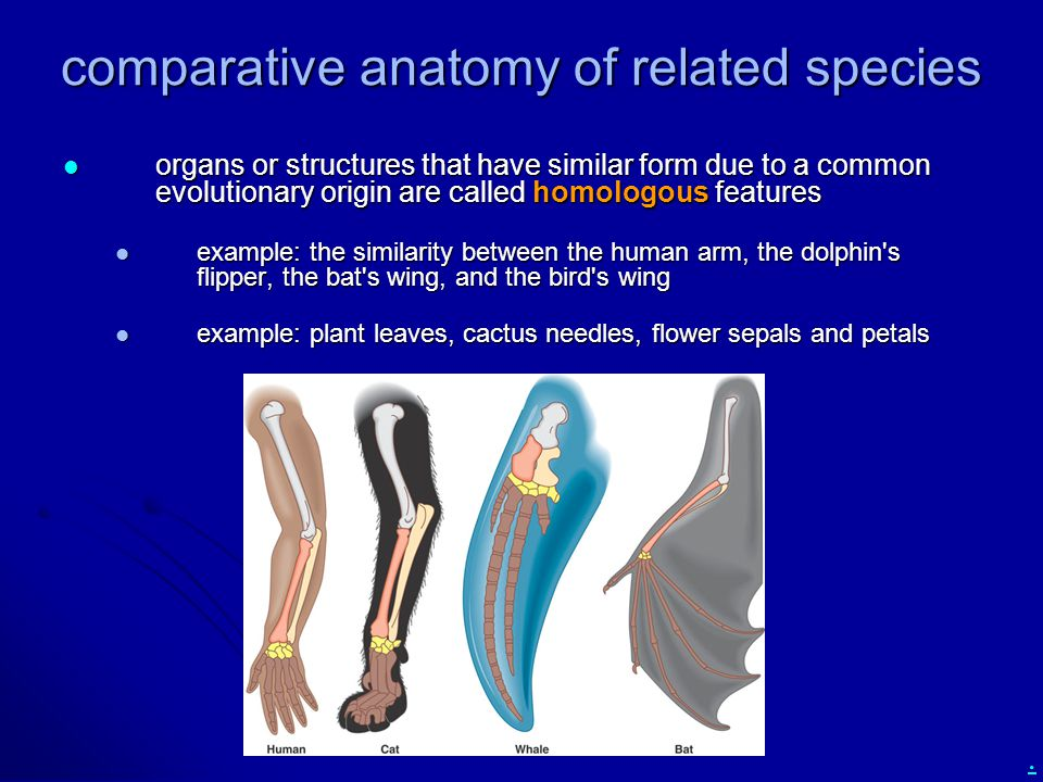 . comparative anatomy of related species organs or structures that have similar form due to a common evolutionary origin are called homologous feature