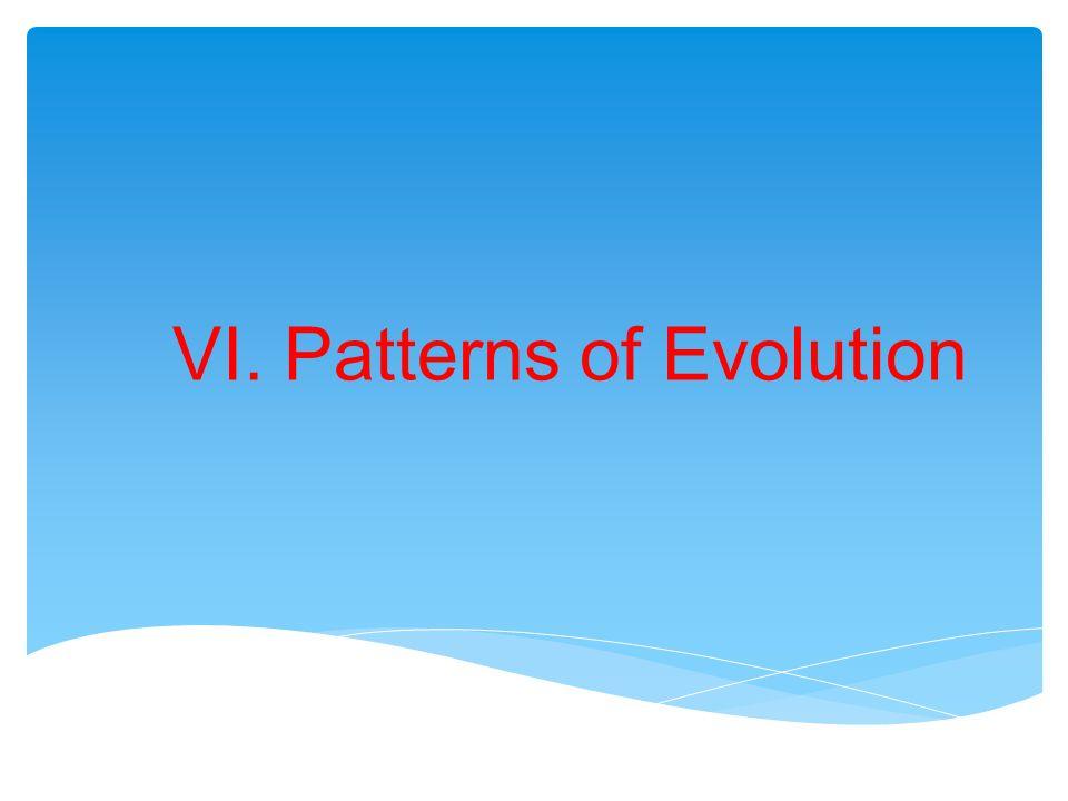 GradualismPunctuated Equilibrium Gradualism vs Punctuated Equilibrium