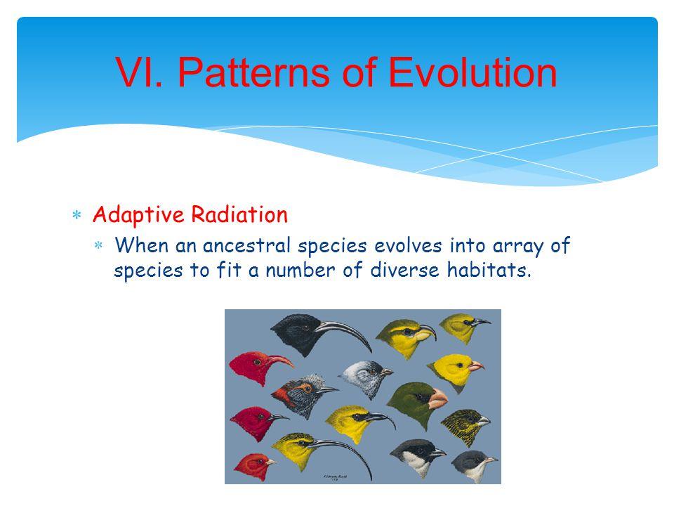 VI. Patterns of Evolution
