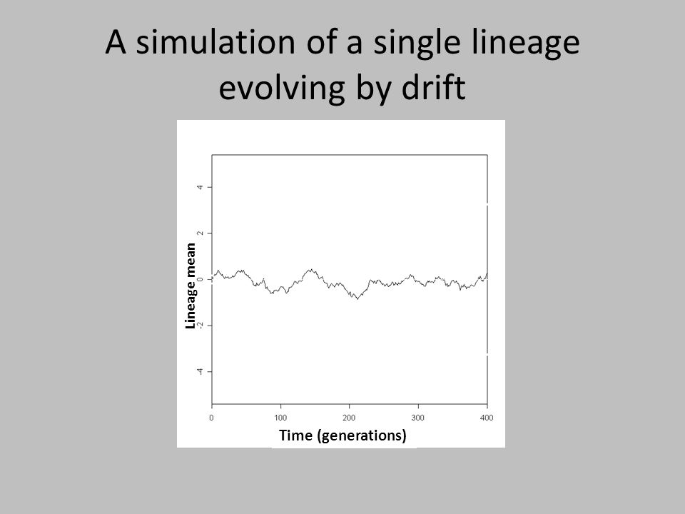 A simulation of a single lineage evolving by drift Time (generations) Lineage mean