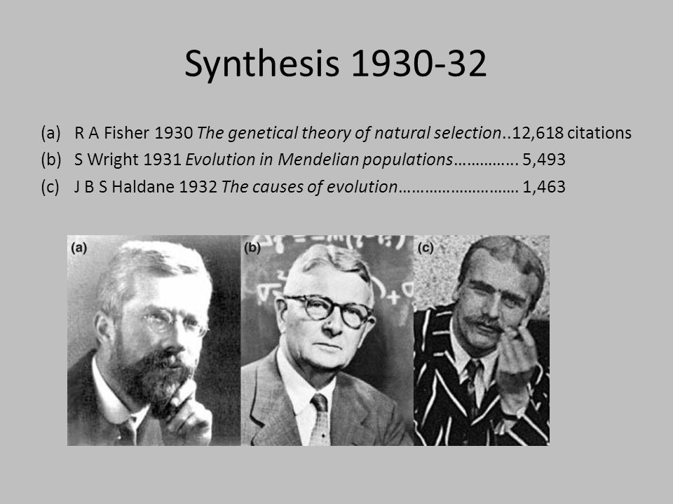 Synthesis 1930-32 (a)R A Fisher 1930 The genetical theory of natural selection..12,618 citations (b)S Wright 1931 Evolution in Mendelian populations……